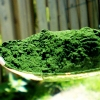 Chlorella: A Superfood With Endless Potential