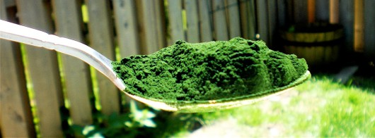 Chlorella-on-a-spoon