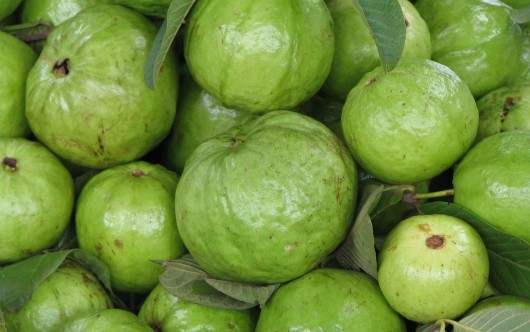 best guavas for juice 530x332 Best Guavas For Guava Juice And How To Choose Them
