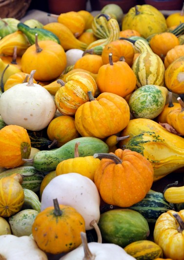 best pumpkins for juice1 377x530 The Best Pumpkins for Pumpkin Juice and How to Choose Them