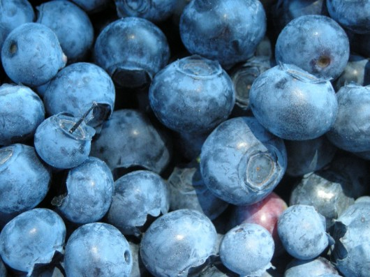 blueberries1 530x397 Blueberry Juice Health Benefits: Blueberrries Have Earned The Right To Be Called A Super Food