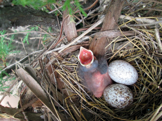 eggs-in-birds-nest