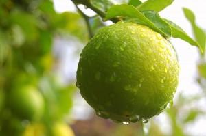 limesss 300x199 Lime Juice
