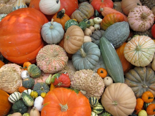 pumpkins 530x397 Which Fruit Contains The Most Lutein zeaxanthin?