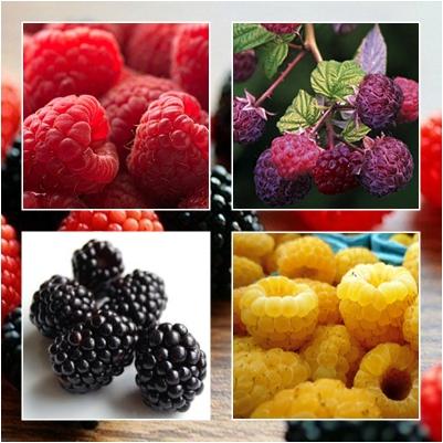 raspwonder Raspberry Juice